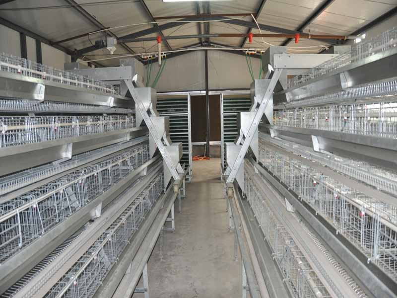 A type chicken cages system