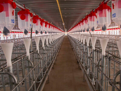 Dry Feeding System for Pigs